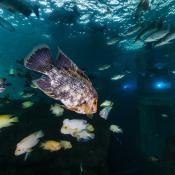 Duik in de wondere onderwaterwereld © Tim van Dongen
