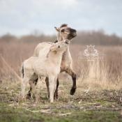 8 fotogenieke locaties in Flevoland © IDG NL