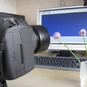 Tips voor betere bloemenfoto's