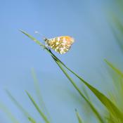 Tips: Natuur fotograferen in april © tips, inspiratie, blog, april, natuur