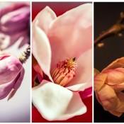 De resultaten van de Zoomnl uitdaging: Drieluiken fotograferen met een sterke samenhang © drieluik, resultaat, experuitdaging