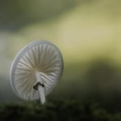 Geef je op voor een workshop macrofotografie samen met Panasonic! © daan de vos 2