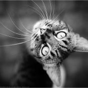 Vijf tips om huisdieren te fotograferen © kat, ogen, scherptediepte