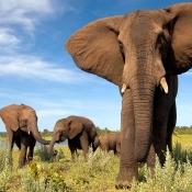 Doe mee met de Fotowedstrijd 'Met oog voor Afrika'  © djoser, fotowedstrijd, zoom