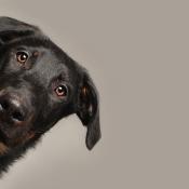 Huisdieren fotograferen: dit zijn de don'ts © IDG NL