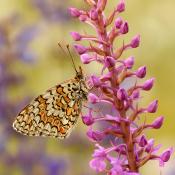 De mooiste vlinderfoto's maak je zo © Vlinder, fotografie, inspiratie, macro