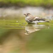 Expertuitdaging: Waanzinnige waterfoto's © water, vogel, reflectie