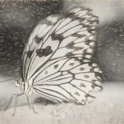 Maak van je foto een schilderij met Topaz Impression © vlinder, schets, tekening