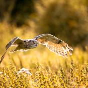 Beginnerstips om roofvogels te fotograferen - de wereld van roofvogelfotografie © blog, patrick, roofvogels