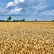 Zo gebruik je de hyperfocale afstand in landschapsfotografie © IDG NL