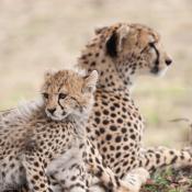 7 Tips voor wildlifefotografie © safari, dieren, wildlife, tips, dierenfotografie