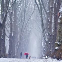 LIVE: De eerste sneeuw van 2021 is gevallen: foto's van Winter in Nederland 2021
