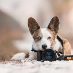 Wat je moet weten als je de stap van hobbyist naar professioneel fotograaf wilt maken