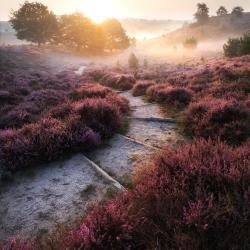 Landschappen in Nederland: tips om heuvellandschappen te fotograferen