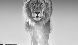 david, yarrow, nikon, wildlife