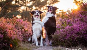 hond, cursus, artikel, dieren, honden_7